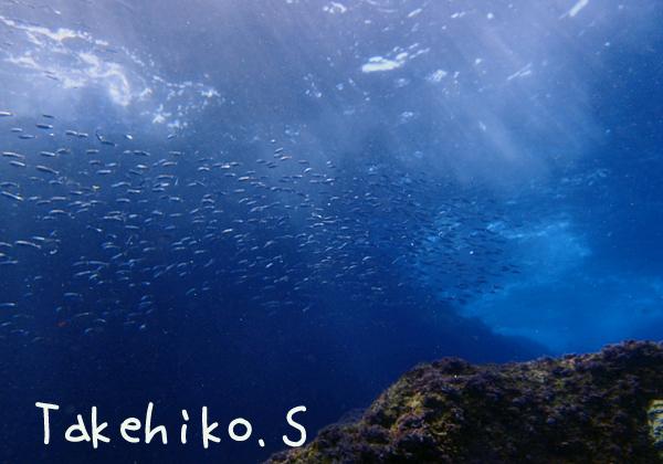 20170319伊豆 ダイビング 伊豆海洋公園