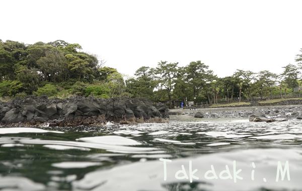20170420伊豆 ダイビング 伊豆海洋公園3