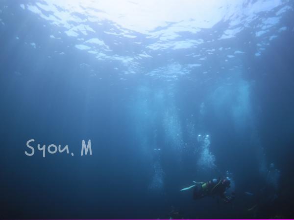 20170702伊豆 ダイビング 伊豆海洋公園