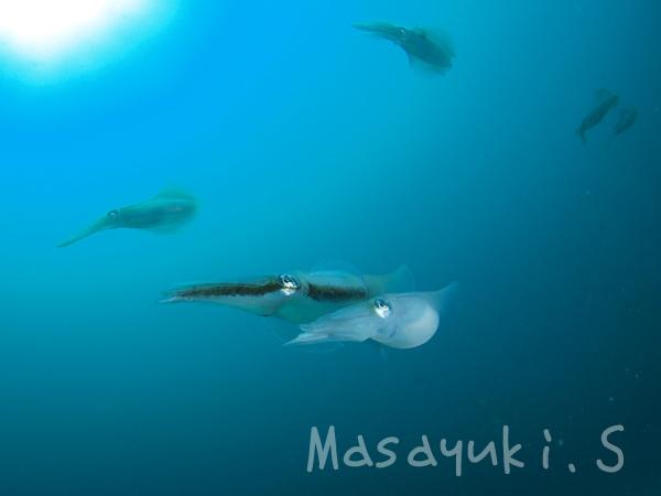 20170829伊豆 ダイビング 伊豆海洋公園4