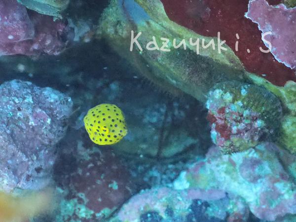 20180827伊豆 ダイビング 伊豆海洋公園7