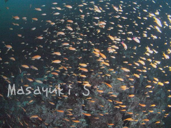 20170815伊豆 ダイビング 伊豆海洋公園2