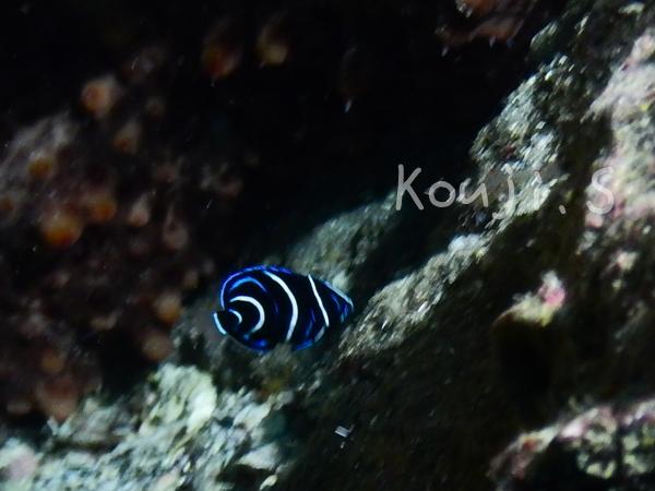 20170916伊豆 ダイビング 伊豆海洋公園 初心者6