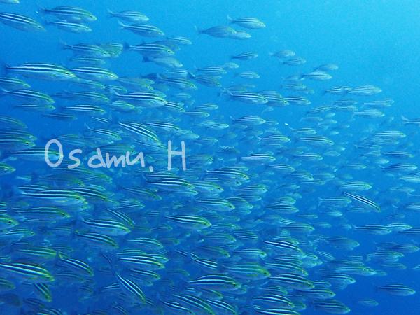 20170909伊豆 ダイビング 伊豆海洋公園6