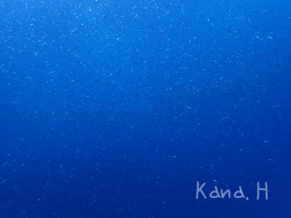 20171202伊豆 ダイビング 伊豆海洋公園
