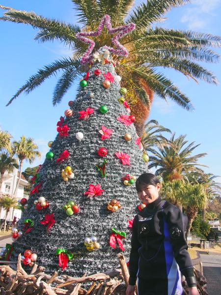 20171216伊豆 ダイビング 伊豆海洋公園 クリスマスツリー