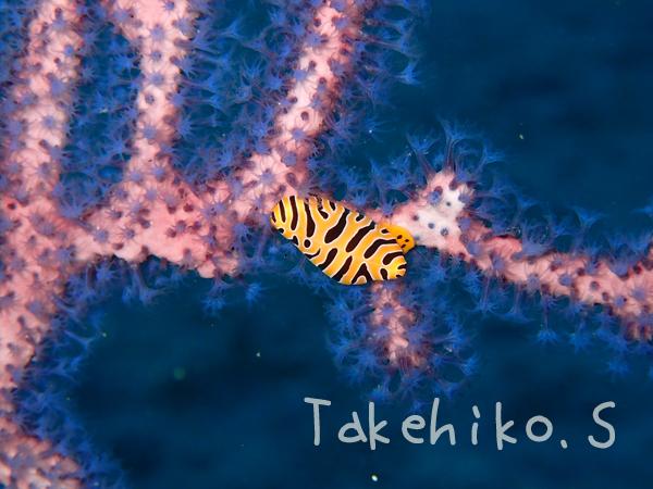 20180103伊豆 ダイビング 伊豆海洋公園2