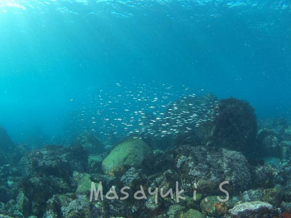 20170207伊豆 ダイビング 伊豆海洋公園5
