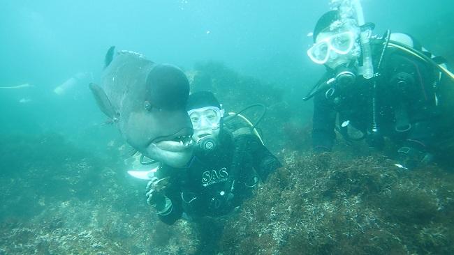 20180331伊豆 ダイビング 伊豆海洋公園2