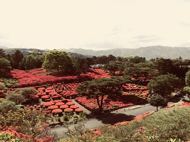 20180416伊豆 ダイビング 川奈