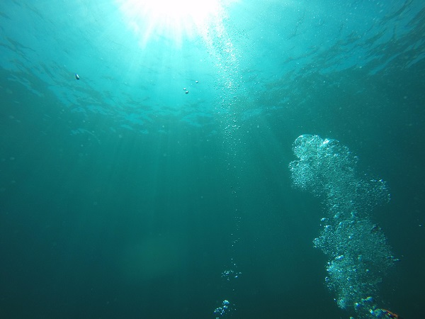 20180821伊豆 ダイビング 富戸 体験ダイビング ダイビングスクール