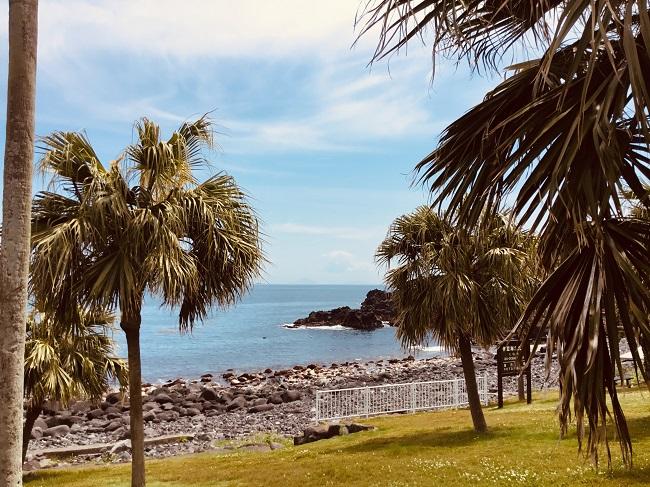 20190505伊豆 ダイビング 伊豆海洋公園3