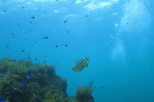 130825伊豆 海洋公園