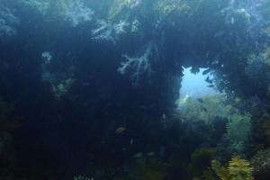 130821伊豆 海洋公園メガネ岩