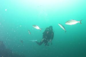130912伊豆 海洋公園2