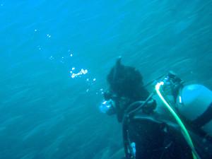 130929伊豆 海洋公園ボラクーダ2