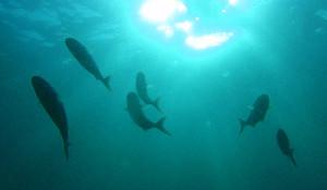 130907伊豆 海洋公園1