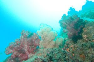 130928伊豆 海洋公園二の根
