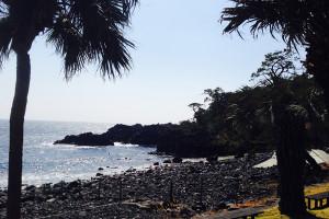 140316伊豆 海洋公園
