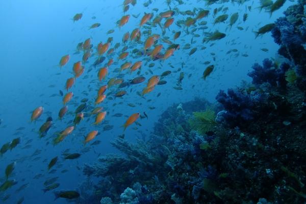 140406伊豆 海洋公園2の根