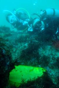 20140515伊豆 海洋公園黄金ヒラメ