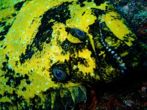 20140707伊豆 海洋公園黄金ヒラメ
