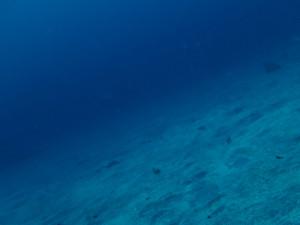 20140707伊豆 海洋公園砂地