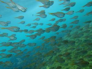 20140707伊豆 海洋公園ミナミハタンポ