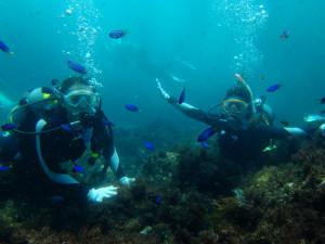 20140729伊豆 海洋公園体験ダイビング5
