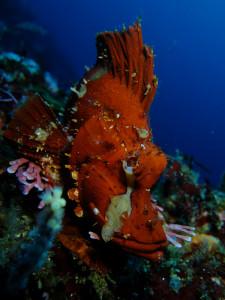 20140730伊豆 海洋公園ナミダカサゴ2