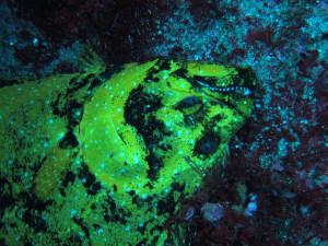 20140718伊豆 海洋公園黄金ヒラメ