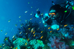 20141205伊豆 ダイビング 伊豆海洋公園二の根3