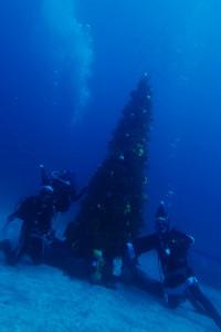 20141224伊豆 ダイビング 伊豆海洋公園クリスマスツリー