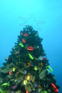 20141225伊豆 ダイビング 伊豆海洋公園クリスマスツリー