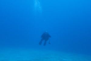 141214伊豆 ダイビング 伊豆海洋公園