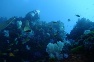 20150103伊豆 ダイビング 伊豆海洋公園二の根