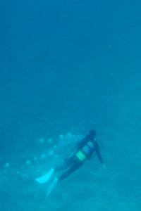 20140318伊豆 ダイビング 伊豆海洋公園 砂地