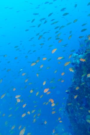 20150417伊豆 ダイビング 伊豆海洋公園 ブリマチの根1