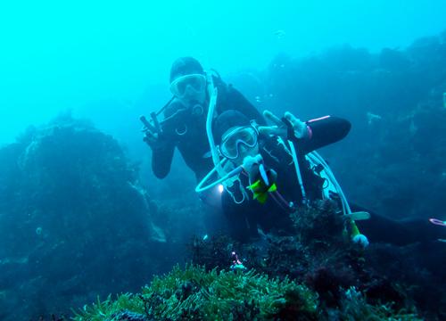 20151103伊豆 ダイビング 伊豆海洋公園 クマノミ