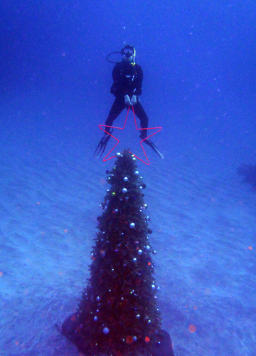 20151129伊豆 ダイビング 伊豆海洋公園 水中クリスマスツリー