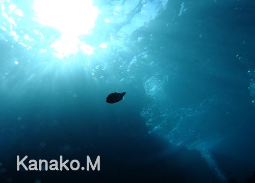 20151227伊豆 ダイビング 伊豆海洋公園 (3)