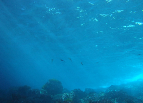 20151226伊豆 ダイビング伊豆海洋公園