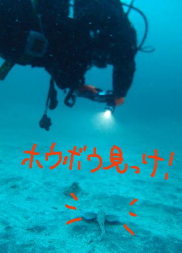 20161017伊豆 ダイビング 伊豆海洋公園 ホウボウ