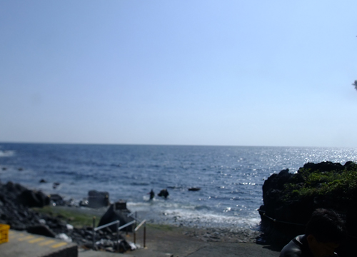 20160420伊豆 ダイビング 伊豆海洋公園 (1)