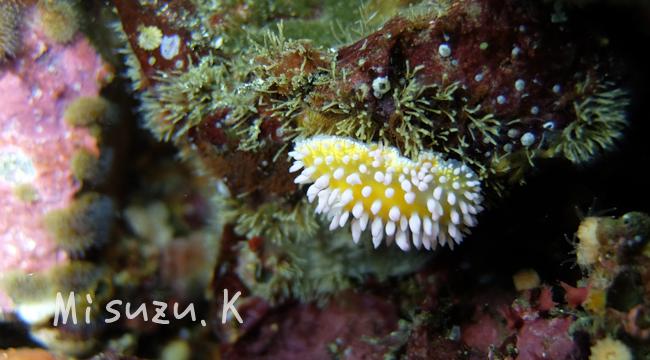 20160627伊豆 ダイビング 伊豆海洋公園 (3)