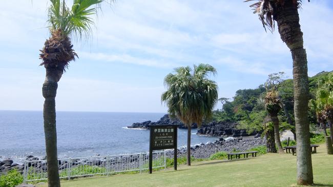 20160610伊豆 ダイビング 伊豆海洋公園 (4)