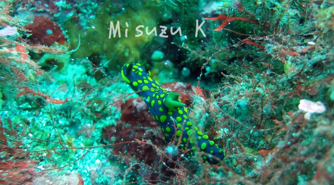 20160627伊豆 ダイビング 伊豆海洋公園 (1)