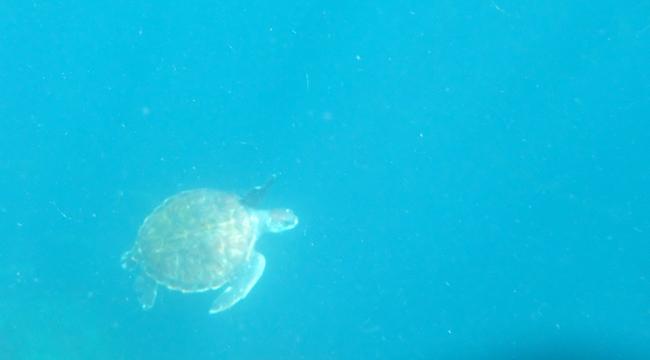 20160626伊豆 ダイビング 海を泳ごう (1)