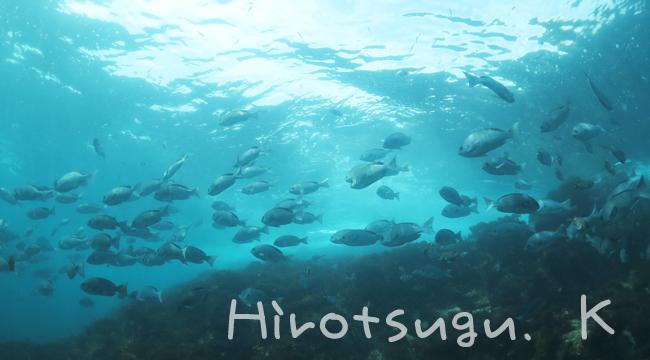 20160815伊豆 ダイビング 伊豆海洋公園 (4)