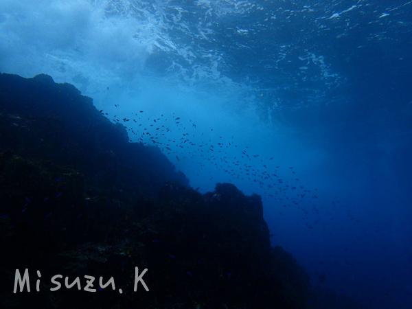20161116伊豆 ダイビング 伊豆海洋公園2